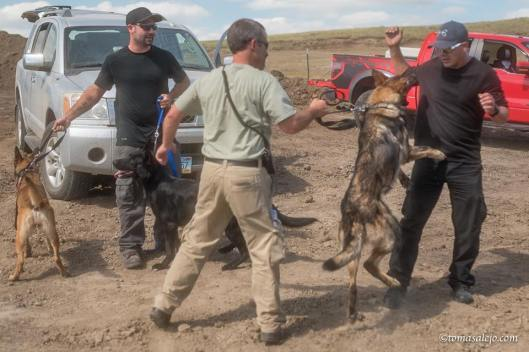 The Latest: North Dakota Pipeline security guards weren't licensed. Investigators say private security guards with dogs who were involved in a clash with Dakota Access pipeline protesters weren't licensed to do security work in North Dakota. Morton County Sheriff's Capt. Jay Gruebele released a statement Wednesday saying results of his office's investigation have been forwarded to prosecutors for consideration of misdemeanor charges. Authorities said four security guards and two guard dogs were injured. The Standing Rock Sioux tribe says protesters reported that six people were bitten by security dogs, and at least 30 people were pepper-sprayed.