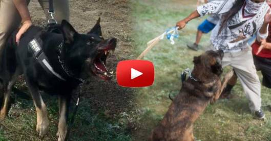 North Dakota Pipeline Security Guards-dogs-attack